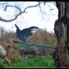 Metalbird Winterkoninkje metalen vogel silhouet