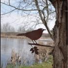 Metal bird Blackbird by Metalbird