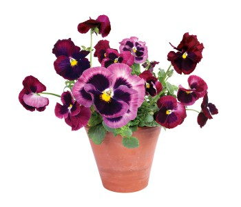 Raamdecoratie Flat Flowers raamstickers violen