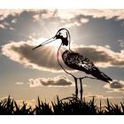 Metalbird Grutto metalen vogel silhouet