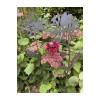 Flowers of Corten steel from Studio Divers – Dahlia 70 cm