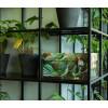 Dutch Design Storage Box Art of Nature - 40 x 31 x 21 cm