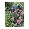 Blumen aus Cortenstahl von Studio Divers - Ein besonders Geschenk