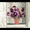 Fensteraufkleber Flat Flowers Violets kaufen Sie unter shop.holland.com