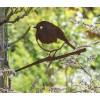 Metall-Vogel Rotkelchen von Metalbird: schönes Geschenk für Vogelliebhaber