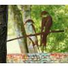 Metalbird Schwalbe Metall Vogel silhouette