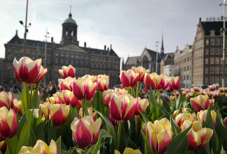 Nationale Tulpendag 2019